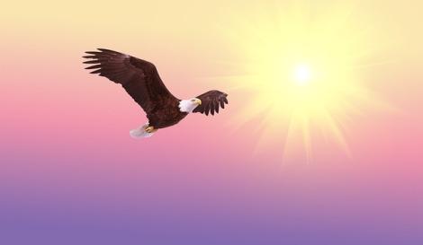 Bald Eagle Flying into Sun