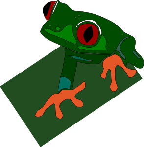 a red eyed frog